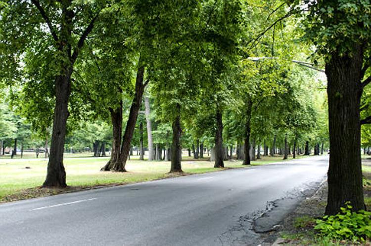 Firmato il decreto per gli alberi in città