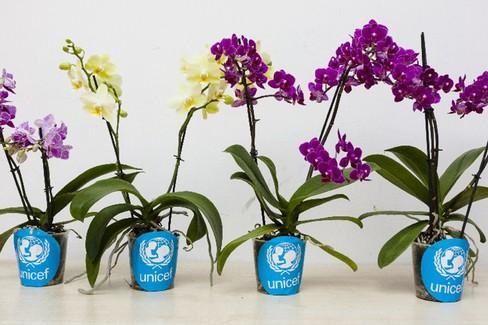 Domani a Pistoia in vendita le orchidee di Unicef