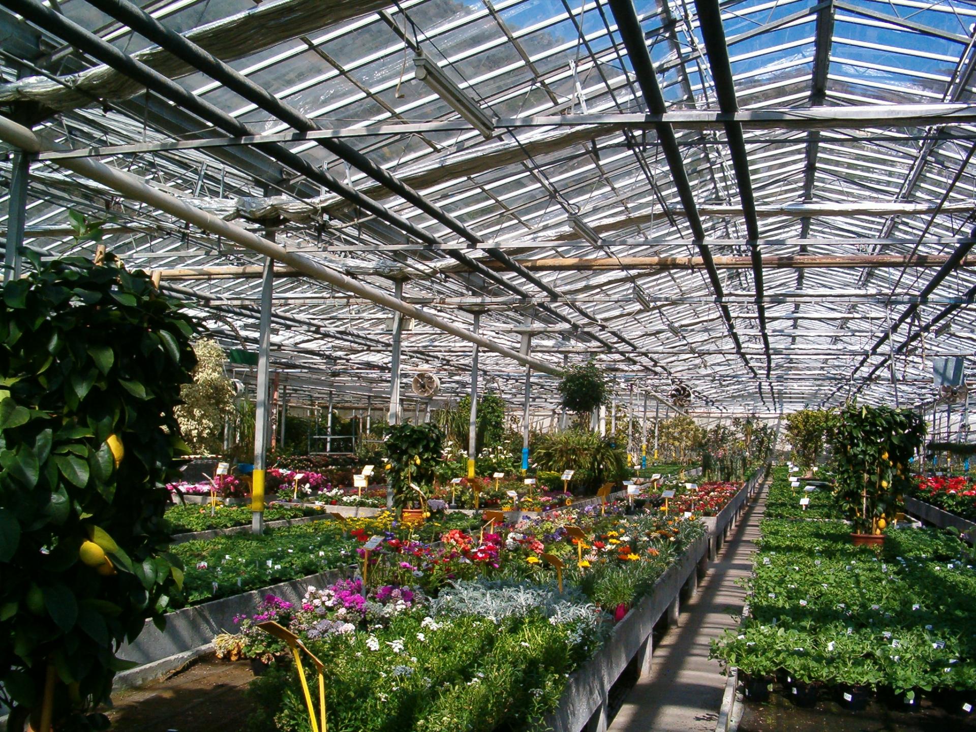 Vivaisti: garantire la circolazione delle piante