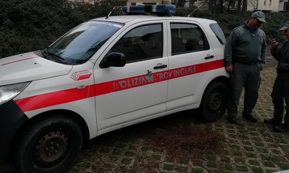 Cronaca, periferia di Pistoia: catturati altri 14 cinghiali.